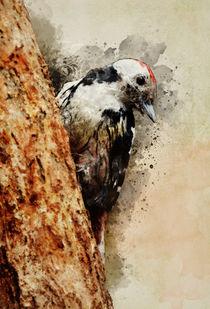 Mr Woodpecker von Jarek Blaminsky