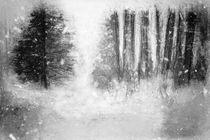 Winterliche Waldlichtung by Petra Dreiling-Schewe