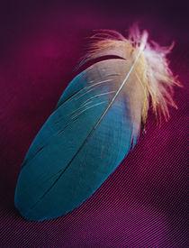 Pretty blue feather von Jarek Blaminsky