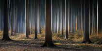 Mystical Wood von Carsten Meyerdierks