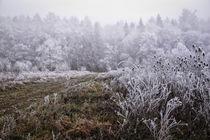 Winterlandschaft mit Nebel und Raureif von Christine Horn