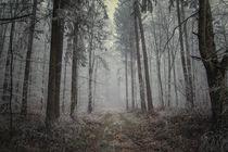 Mystischer Nebelwald mit Raureifstimmung von Christine Horn