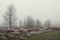 Landschaft im Hegau mit Nebel und Raureif von Christine Horn