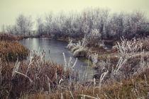 Winterstimmung am Biotop zwischen Mahlspüren und Raithaslach - Hegau von Christine Horn