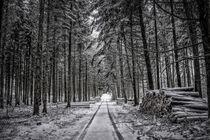 Waldweg im Hegau von Christine Horn