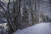 Weg durch den Winterwald im Hegau von Christine Horn