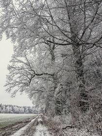 Feldweg und Bäume im Winter mit Raureif bei Stockach - Hegau by Christine Horn