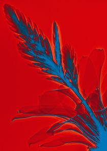 Durchleuchtete Bromelie by Lanuma - colourful art