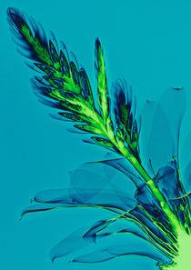 Durchleuchtete Bromelie von Lanuma - colourful art
