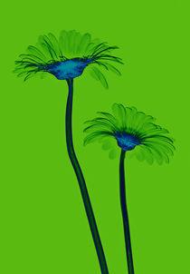 Durchleuchtete Gerbera von Lanuma - colourful art