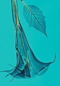 Durchleuchtete Engelstrompete von Lanuma - colourful art