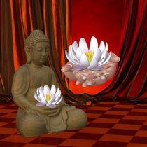 Buddha von Conny Dambach
