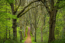 Allee im Wald von Armin Redöhl