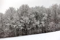 Wintereinbruch von Harald Schottner