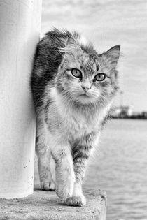Closeup Of A Curious Cat von tastefuldesigns