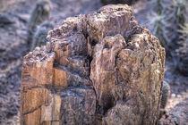 Petrified Wood by Elisabeth  Lucas