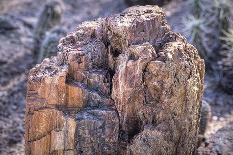 Petrified-wood
