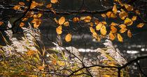 autumn backlight von Erik Mugira