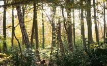 Herbstwald von Erik Mugira