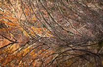 autumn fishbones von Erik Mugira
