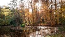 Herbstufer von Erik Mugira