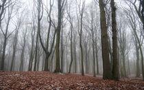 hazy winter woods von Erik Mugira