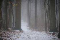 Winterdunst im Wald von Erik Mugira