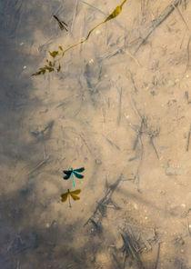 weightless shadows von Erik Mugira
