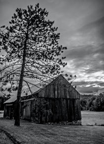 Pine Barn by James Aiken