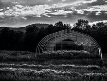 Reclaimed Greenhouse 2 by James Aiken