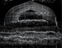 Reclaimed Greenhouse 3 by James Aiken
