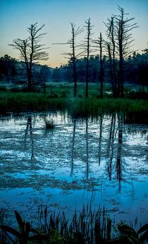 Swampland Sunrise 2 by James Aiken