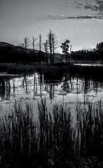 Swampland Sunrise 1 - BW by James Aiken