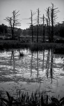 Swampland Sunrise 2 - BW by James Aiken