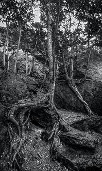 The Notch Trees 2 by James Aiken