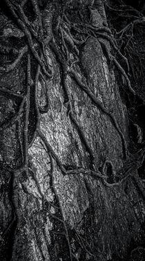 The Notch Trees 5 by James Aiken