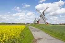 Windmühle Bierde (Petershagen) mit gelbem Rapsfeld von Olaf Schulz