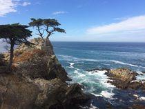Lone Cypress - California by usaexplorer