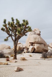 Joshua Tree NP by usaexplorer