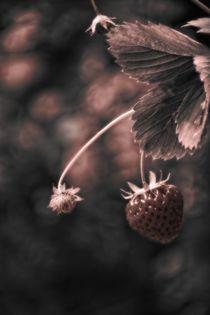 Erdbeere von Claudia Evans