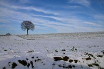 Winter von Ingrid Bienias