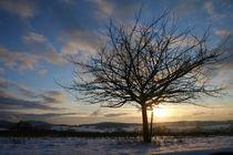 Winterabend von Ingrid Bienias