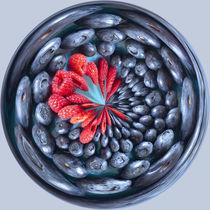 Blueberry Orb 2 von Elisabeth  Lucas