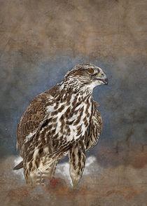 Falcon by Carlos Enrique Duka