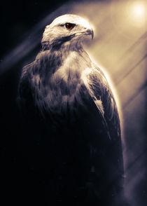 Eagle by Carlos Enrique Duka