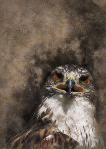Eagle head by Carlos Enrique Duka