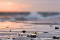 Muscheln im Abendrot von freakarellasfotografie