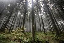 Der Wald von freakarellasfotografie