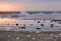 Strandgut von freakarellasfotografie