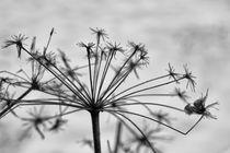 Winter von freakarellasfotografie